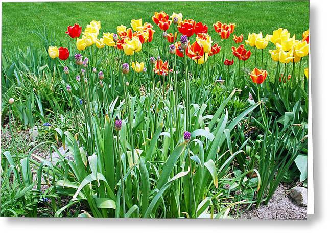 Colorful Spring Greeting Card by Aimee L Maher Photography and Art Visit ALMGallerydotcom