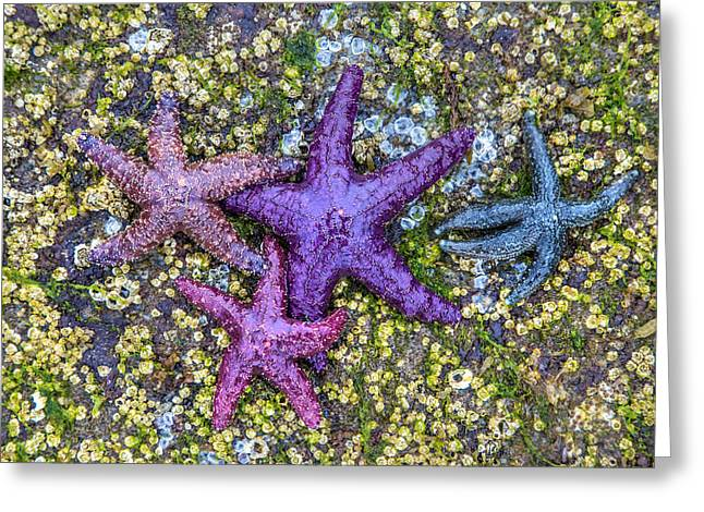 Colorful Starfish Bc Greeting Card by Pierre Leclerc Photography