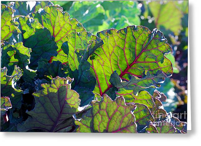 Edible Digital Art Greeting Cards - Colorful Swiss Chard Greeting Card by Nancy Mueller