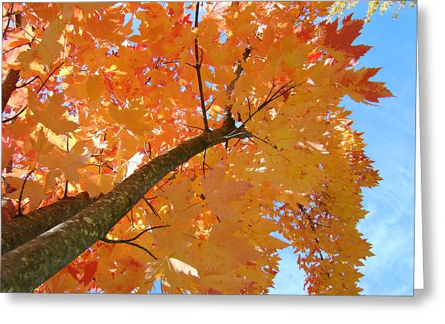Autumn Prints Greeting Cards - Colorful Trees Art Prints Autumn Yellow Red Leaves Greeting Card by Baslee Troutman Fine Photography Art