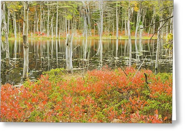 Woodland Scenes Greeting Cards - Colorful Trees Reflecting In Maine Beaver Pond Greeting Card by Keith Webber Jr