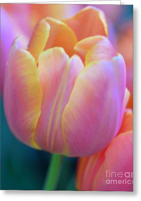 Struckle Greeting Cards - Colorful Tulip Greeting Card by Kathleen Struckle