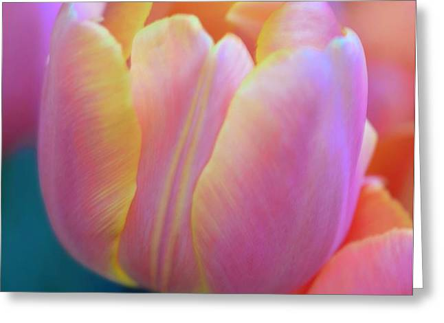 Colorful Tulip Greeting Card by Kathleen Struckle