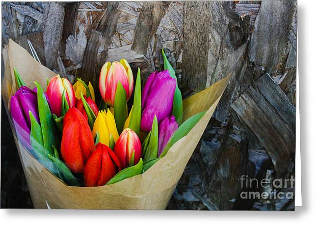 Pinks And Purple Petals Greeting Cards - Colorful Tulips Greeting Card by Babs Gorniak