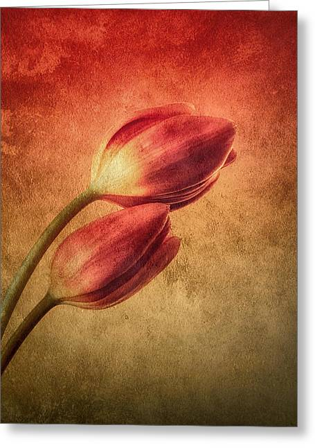 Red Photographs Greeting Cards - Colorful Tulips Textured Greeting Card by Wim Lanclus