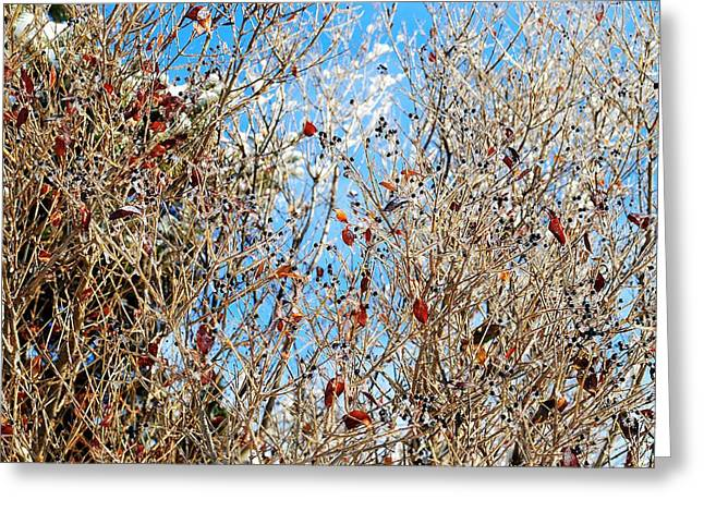 Oxymoron Greeting Cards - Colorful Winter Wonderland Greeting Card by Frozen in Time Fine Art Photography