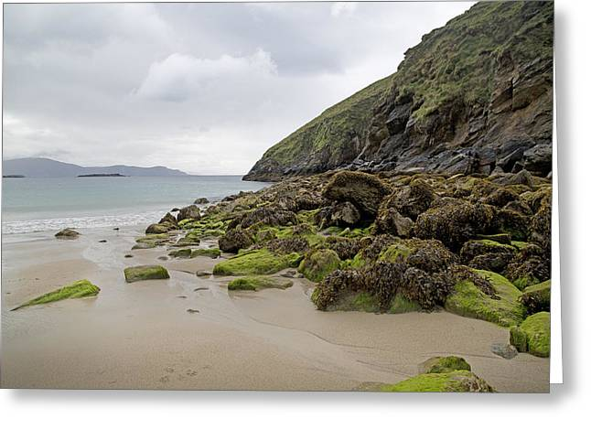 Green Day Greeting Cards - Coloring Life Keem Beach Ireland Greeting Card by Betsy A  Cutler