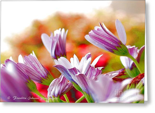 My Ocean Greeting Cards - Colors Greeting Card by   FLJohnson Photography