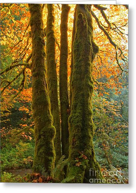 State Parks In Oregon Greeting Cards - Colors In The Rainforest Greeting Card by Adam Jewell