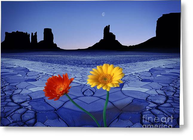 Photographs With Red. Greeting Cards - Colors in the Valley Greeting Card by Edmund Nagele
