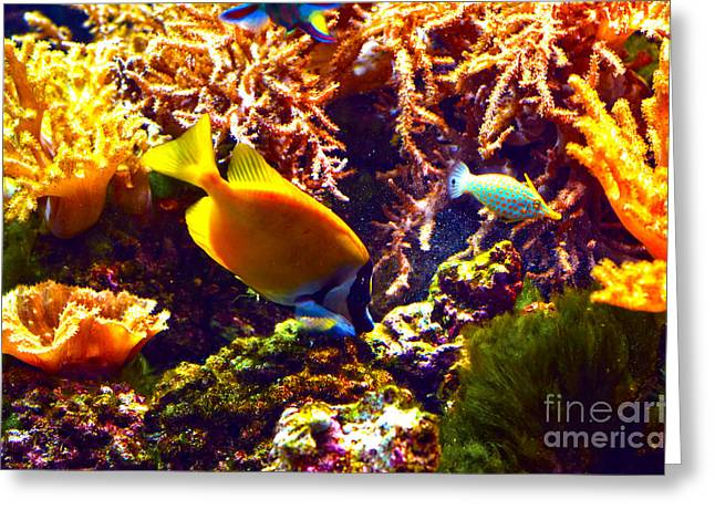 Recently Sold -  - Nature Greeting Cards - Colors of an Aquarium Greeting Card by Pravine Chester