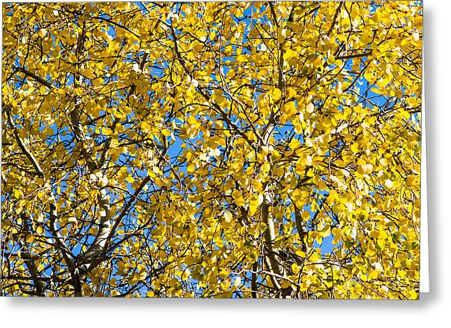 Trembling Greeting Cards - Colors Of Autumn - Yellow - Featured 3 Greeting Card by Alexander Senin