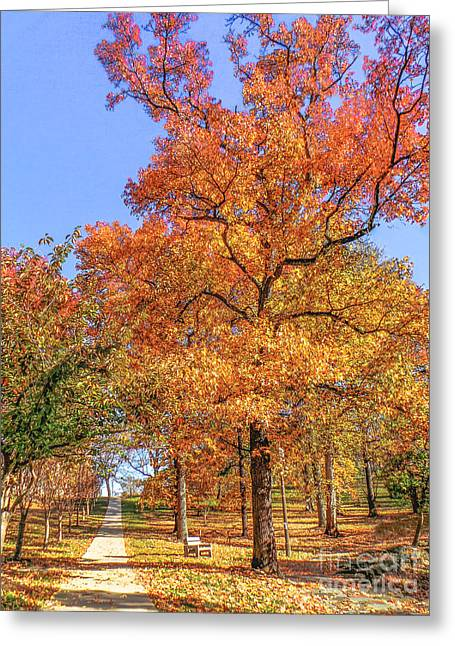 Clique Greeting Cards - Colors of Fall Greeting Card by Charlie Cliques