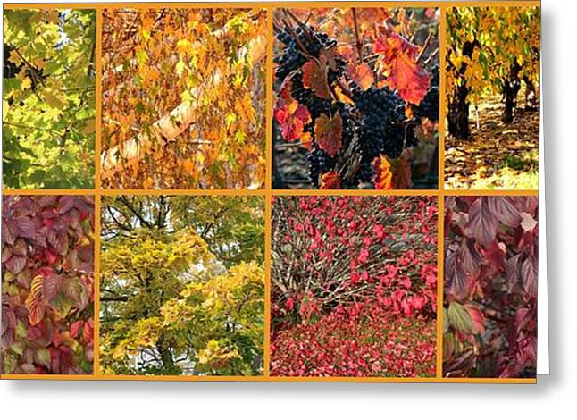 Grape Leaf Greeting Cards - Colors of Fall Collage Greeting Card by Carol Groenen