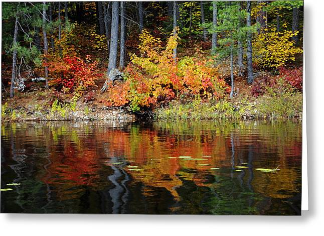 Fall Colors Greeting Cards - Colors Of Fall Greeting Card by Debbie Oppermann