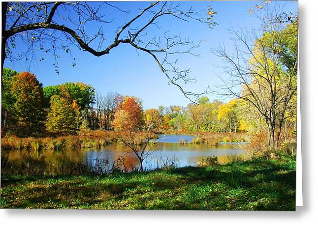 Diane Reed Greeting Cards - Colors of Fall Greeting Card by Diane Reed