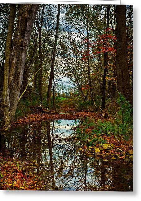 Indiana Autumn Greeting Cards - Colors of Fall Greeting Card by Kristi Swift