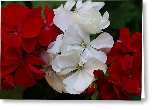 Colors Of Flowers Greeting Card by James C Thomas
