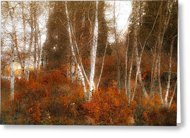 Julie Palencia Photography Greeting Cards - Colors of Nature Greeting Card by Julie Palencia