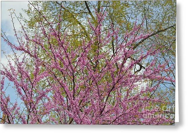 Indiana Flowers Greeting Cards - Colors of Spring 1 Greeting Card by Alys Caviness-Gober