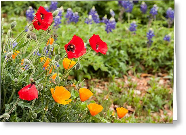Wildseed Greeting Cards - Colors of Spring Greeting Card by Melinda Ledsome