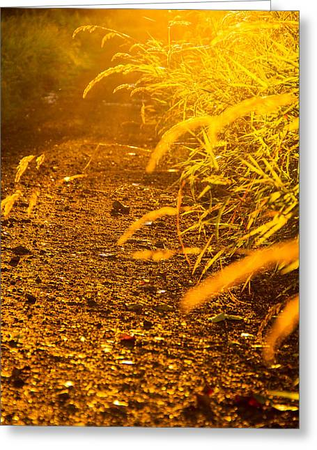 Sauvie Island Greeting Cards - Colors of summer Greeting Card by Kunal Mehra