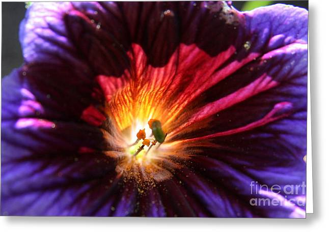 Wildflowers Greeting Cards - Colors of Summer Greeting Card by Neal  Eslinger