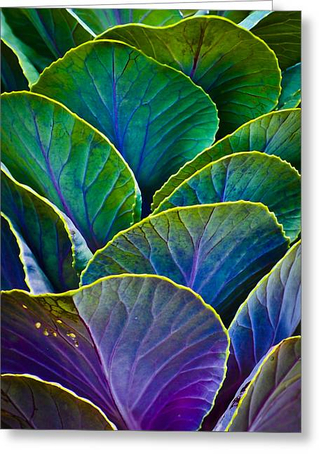 Earthy Raw Art Greeting Cards - Colors of the Cabbage Patch Greeting Card by Christi Kraft