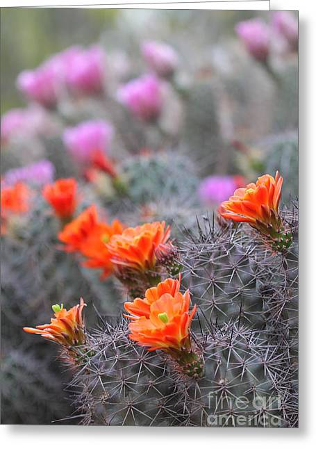 Ruth Jolly Greeting Cards - Colors of the desert Greeting Card by Ruth Jolly