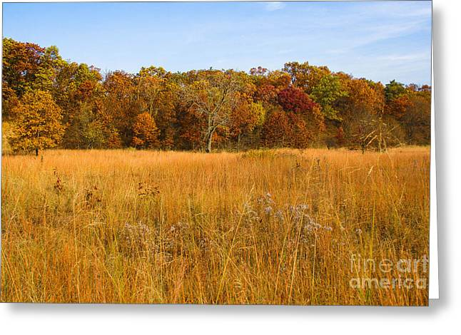 Indiana Autumn Greeting Cards - Colors of the Dunes Greeting Card by Lynne Dohner