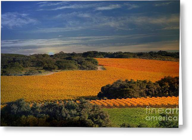 Fall Vineyard Greeting Cards - Colors of Vines Greeting Card by Stephanie Laird