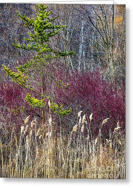 Fall Grass Greeting Cards - Colors of winter Greeting Card by Elena Elisseeva