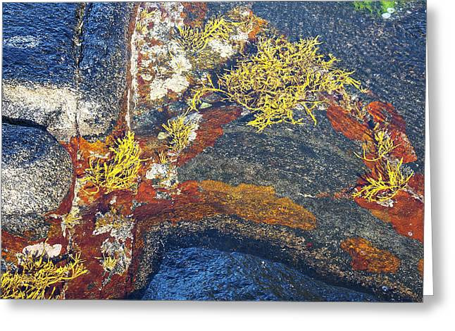 Alga Greeting Cards - Colors on rock II Greeting Card by Heiko Koehrer-Wagner