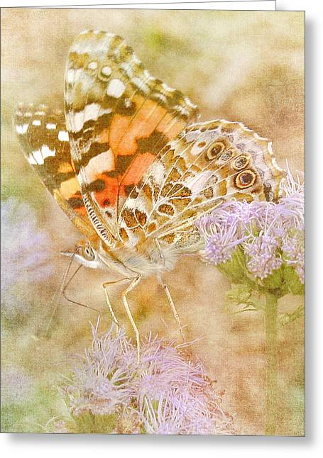 Painted Lady Greeting Cards - Colors That Fly Greeting Card by David and Carol Kelly
