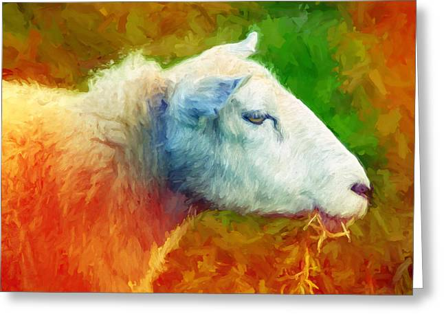 Baar Greeting Cards - Colorsheep Greeting Card by Lutz Baar