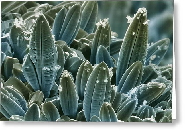 Tungsten Greeting Cards - Coloured Sem Of Tungsten Oxide Crystals Greeting Card by Power And Syred