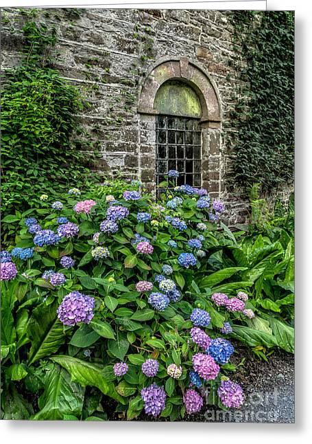Hydrangea Greeting Cards - Colourful Hydrangeas Greeting Card by Adrian Evans