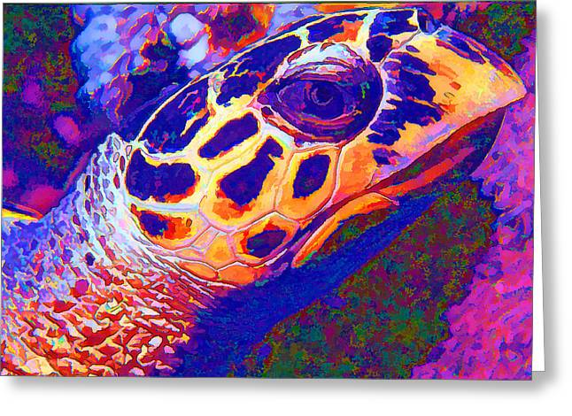 Undersea Photography Digital Art Greeting Cards - Colourful Turtle Greeting Card by Roy Pedersen