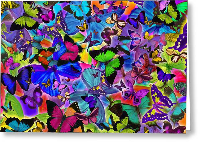 Euphoria Greeting Cards - Colours Of Butterflies Greeting Card by Alixandra Mullins