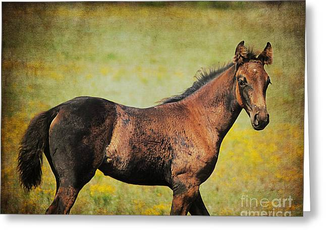 Colt In The Meadow I Greeting Card by Jai Johnson