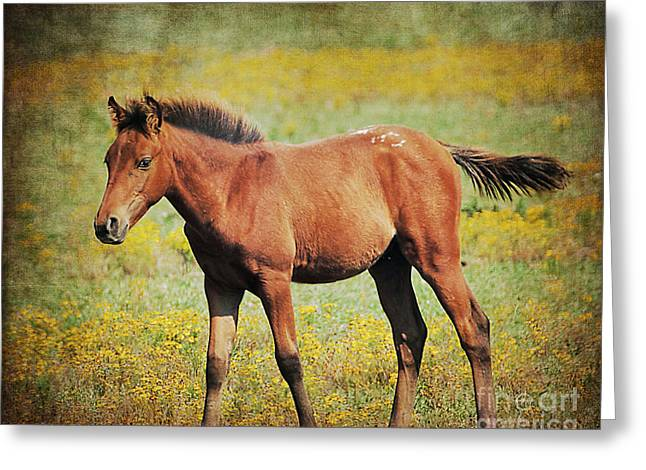 Colt In The Meadow II Greeting Card by Jai Johnson