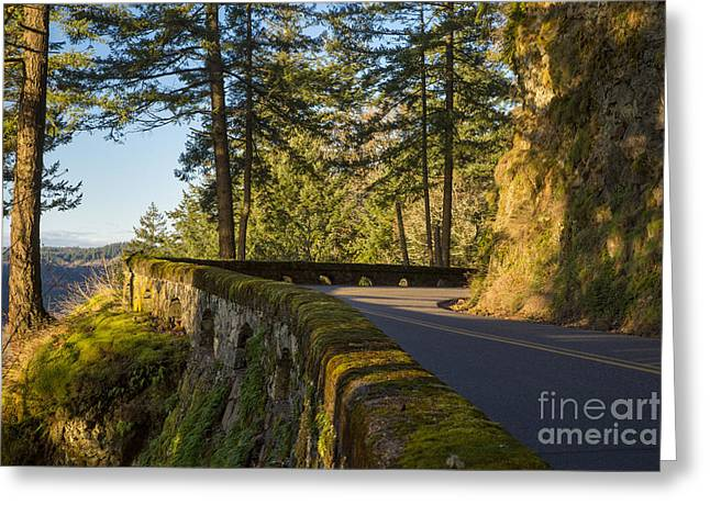 Fir Trees Greeting Cards - Columbia River Gorge Highway Greeting Card by Brian Jannsen