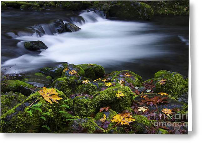 Water In Creek Greeting Cards - Columbia River Gorge Tanner Creek 1 Greeting Card by Bob Christopher