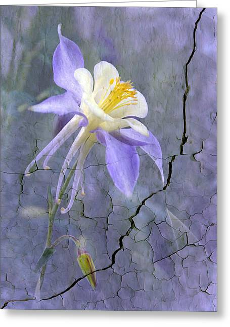 Canna Greeting Cards - Columbine on Cracked wall Greeting Card by James Steele