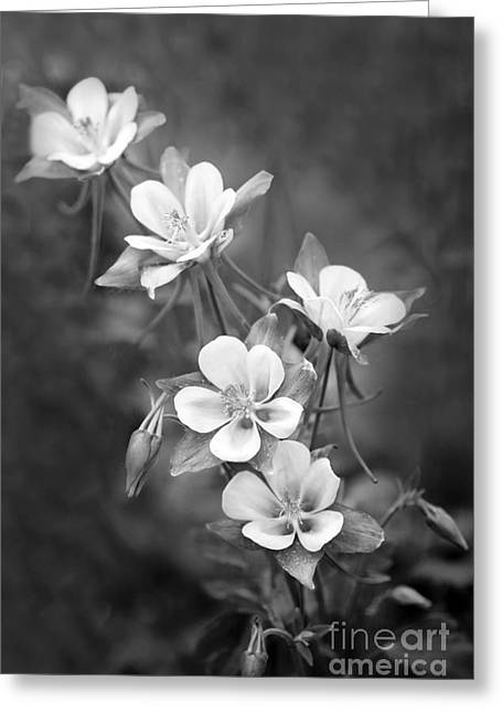 Columbine Greeting Cards - Columbine Greeting Card by Rebecca Cozart