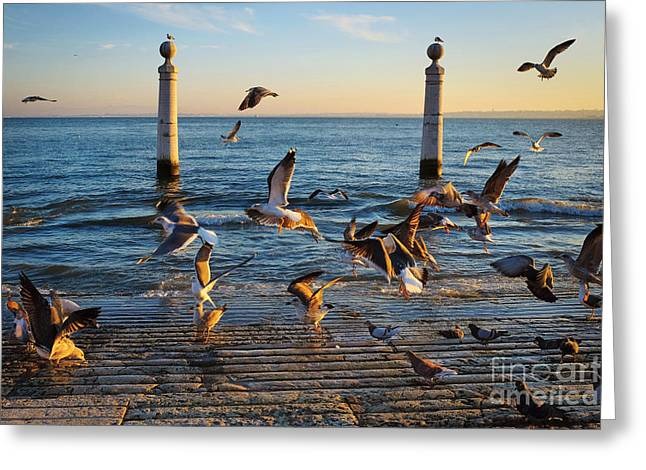 Historic City Pier Greeting Cards - Columns Dock in Lisbon Greeting Card by Carlos Caetano