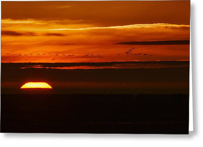 Colusa Greeting Cards - Colusa Sunrise Greeting Card by Terry Scussel