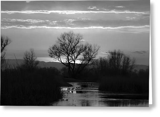 Colusa Greeting Cards - Colusa Wildlife Black and White Greeting Card by Along The Trail