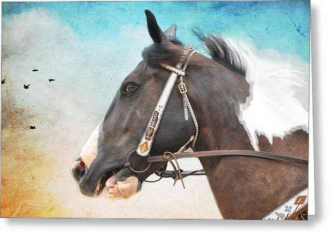 Soft Light Greeting Cards - Comanche Greeting Card by Jan Amiss Photography