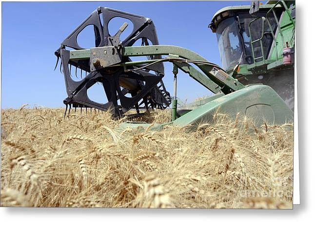 Harvest Time Greeting Cards - Combine harvester  Greeting Card by Shay Fogelman